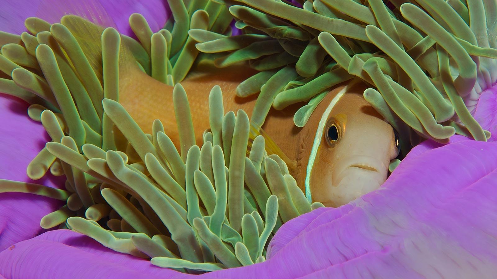 Scuba Diving Maldives Six Senses Laamu