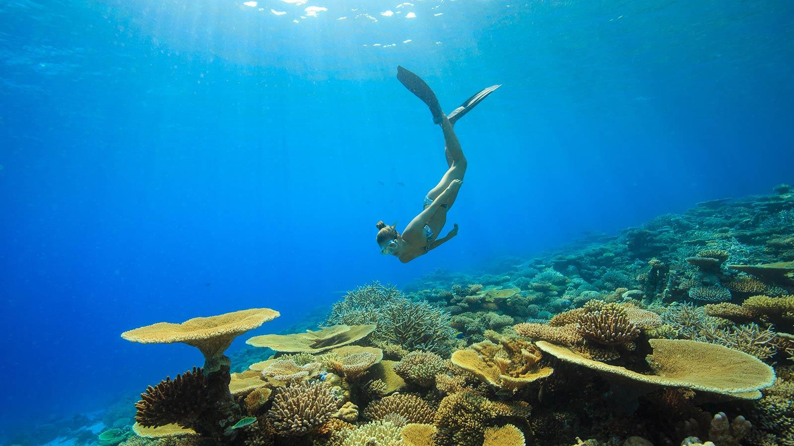 Snorkel Maldive Six Senses Laamu