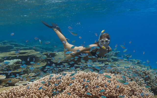 Free Snorkel Experience at the Kihaa House Reef