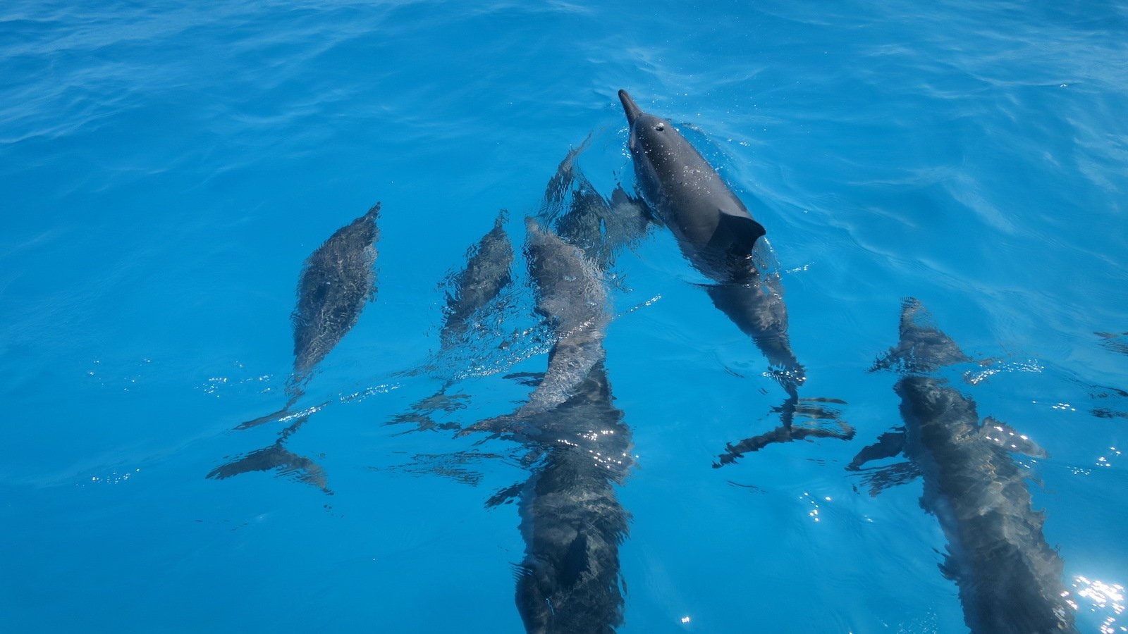 dolphin pod from the boat