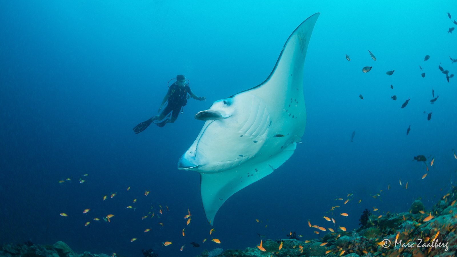 manta encounter in June