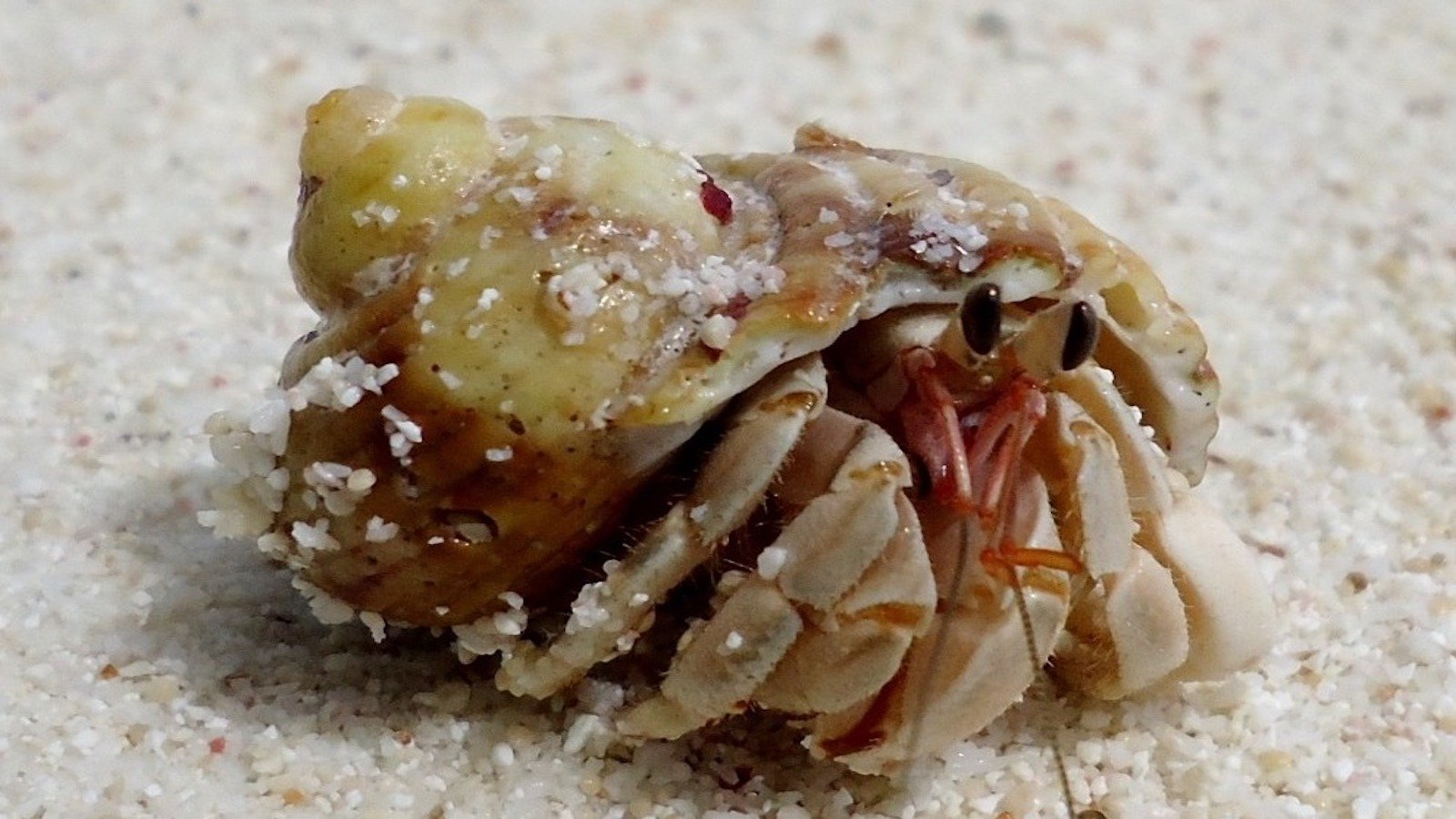 Hermit crabs on the beach