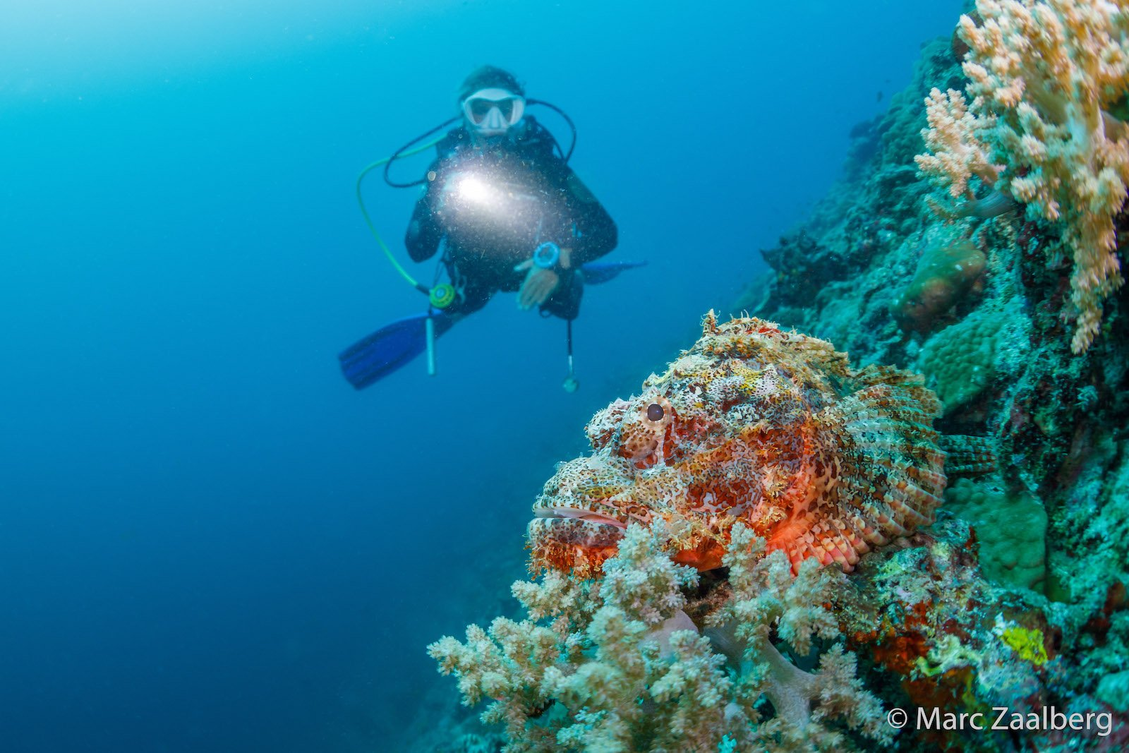hints and tips for scuba diving