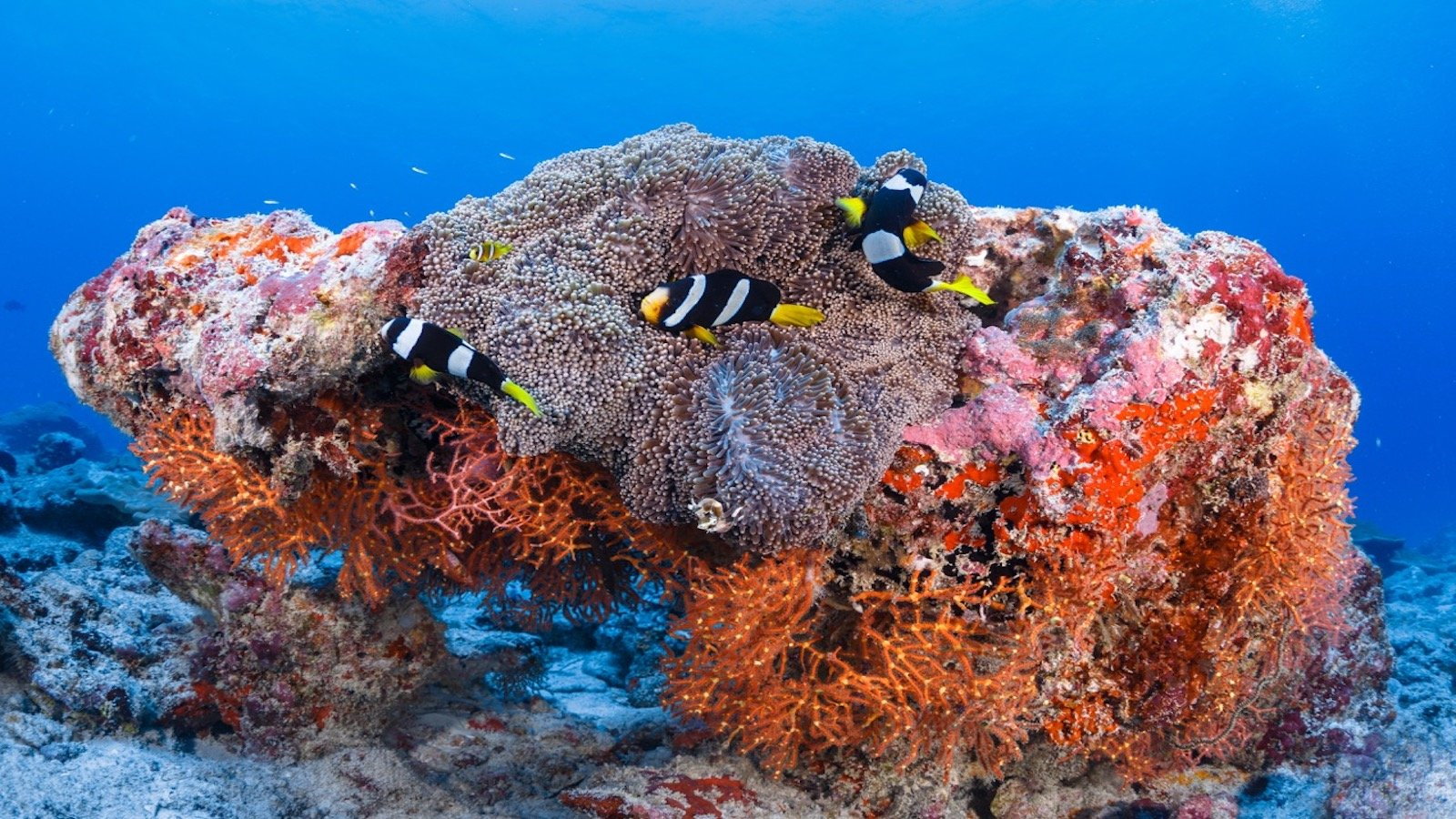 How to spot marine Life