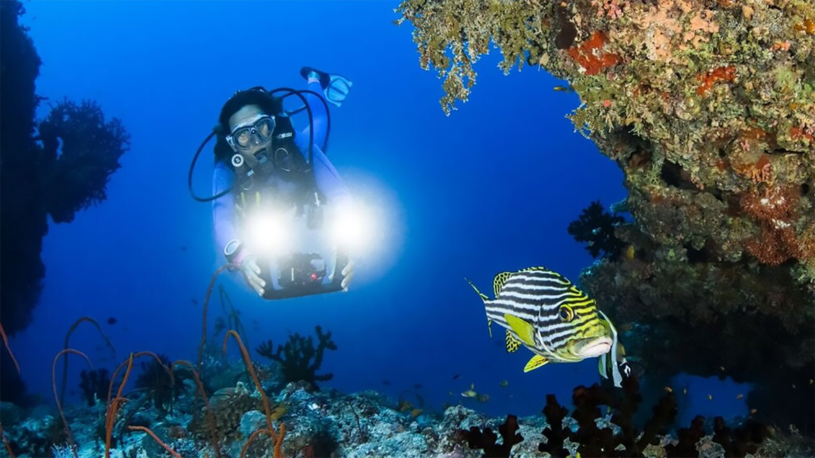 Diving with a GoPo